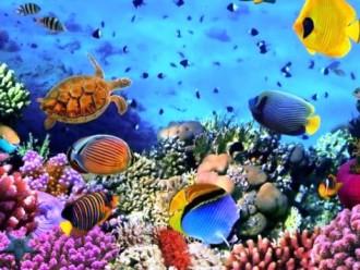 Дайвинг в Азии: покорить моря и океаны