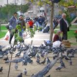 Картал: район Стамбула, который летает