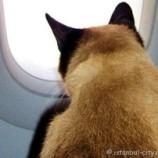 Как летать с животными или Кошки в большом городе