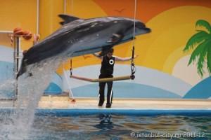 Стамбульский дельфинарий – Море веселья