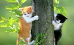 Контрастная Турция — страна бродячих кошек и собак