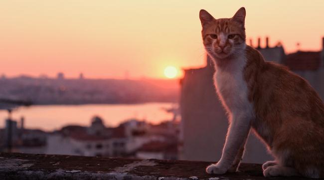 kedi-film-turcia