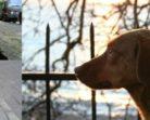 Известные кошки (и собаки) Стамбула