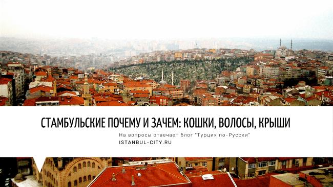 Стамбульские почему и зачем: Кошки, волосы, крыши